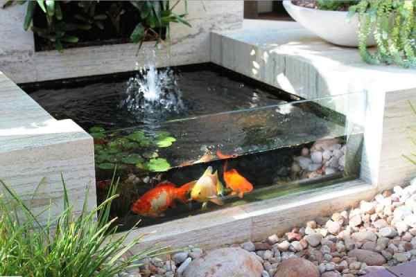 pez koi estanque 2