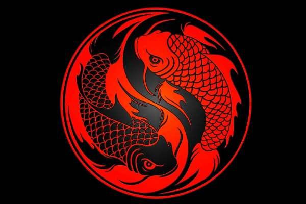 pez koi ying yang
