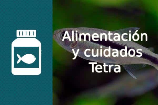 Alimentación y cuidados del pez Tetra