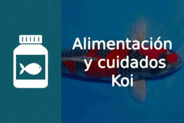 Alimentación y cuidados de los peces Koi