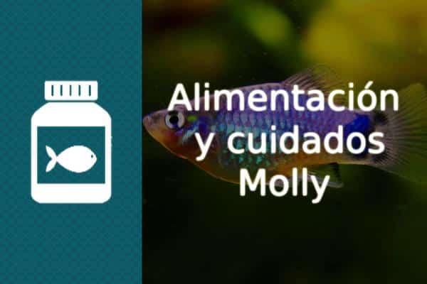 Alimentación pez Molly