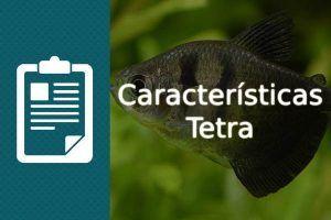 Caracteristicas Tetra