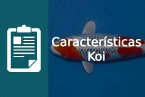 Caracteristicas koi