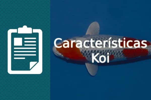 Características del pez Koi