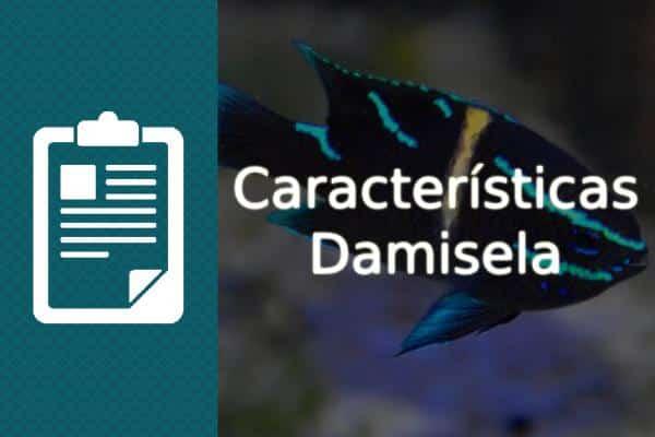 Características del pez Damisela de agua salada