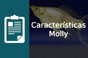 Características pez Molly