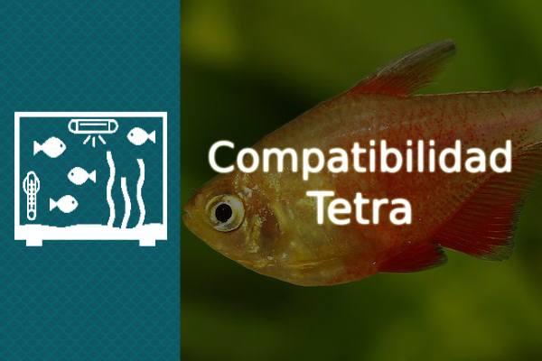 Compatibilidad del pez Tetra