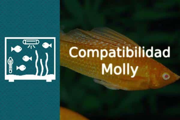 Compatibilidad pez Molly