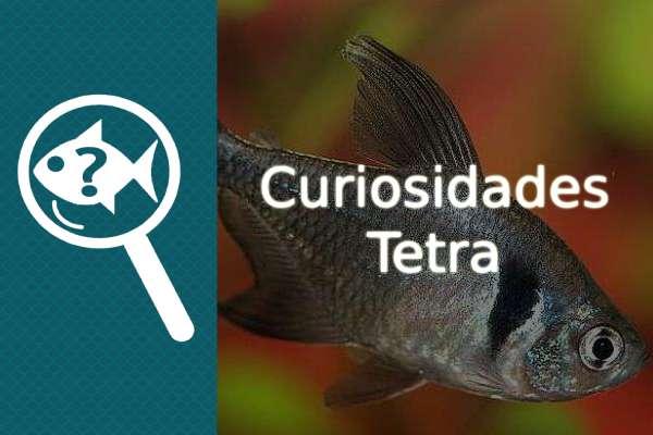 Curiosidades del pez Tetra
