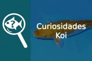 Curiosidades koi