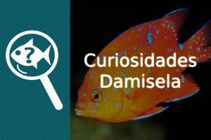 Curiosidades pez Damisela