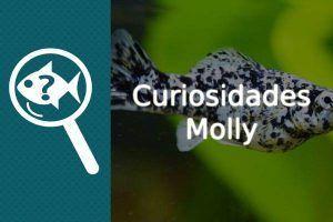 Curiosidades pez Molly