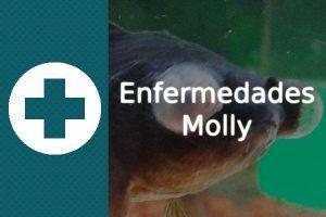 Enfermedades pez Molly