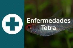 Enfermedades Tetra