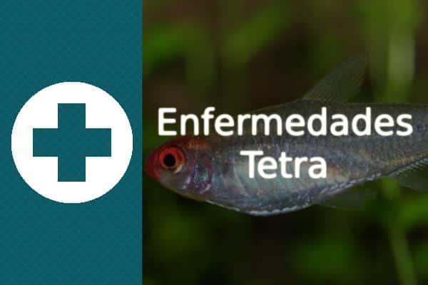 Enfermedades del pez Tetra