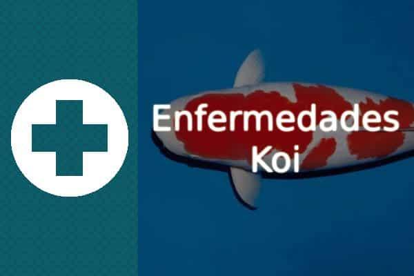 Enfermedades del pez Koi