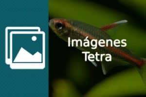 Imagenes Tetra
