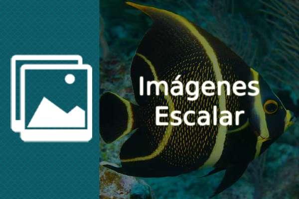 Imágenes del pez escalar