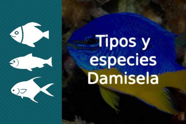 Especies y tipos de pez Damisela