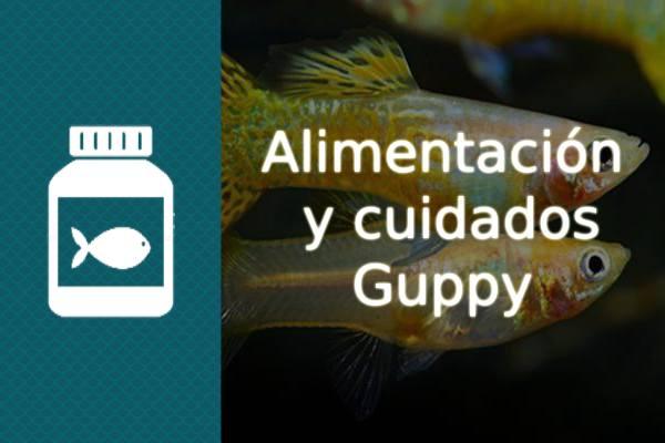 Alimentación y cuidados del pez Guppy