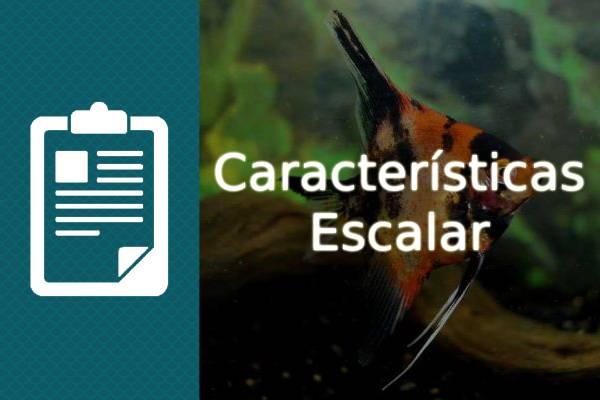 características del pez escalar