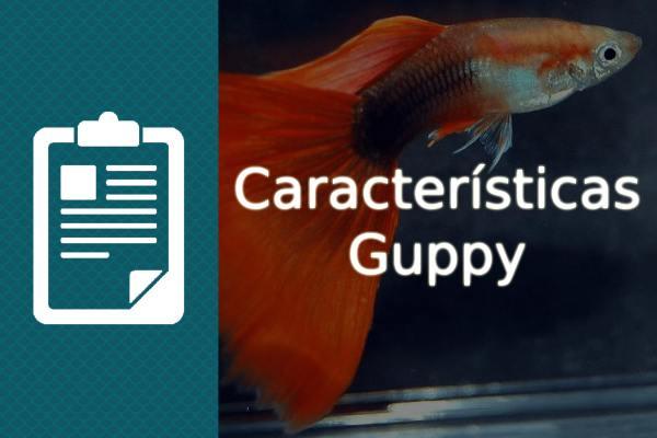 Características de los peces Guppy