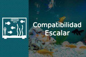 compatibilidad escalar