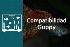 compatibilidad guppy