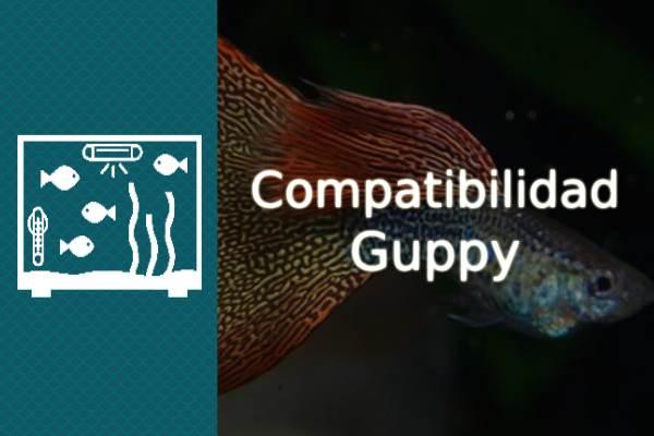 Compatibilidad del pez Guppy