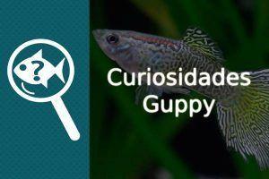 curiosidades guppy