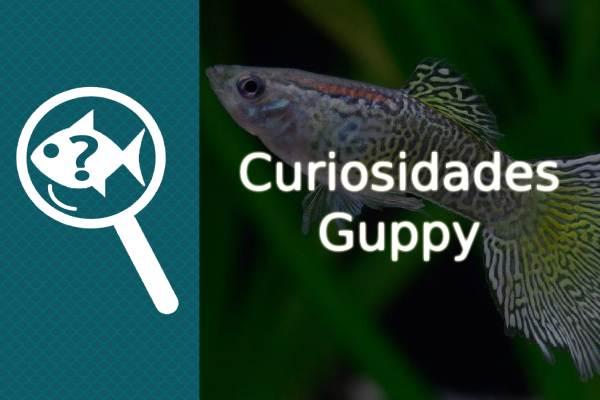 Curiosidades del pez Guppy