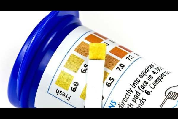 Kit medición agua amoniaco nitrito