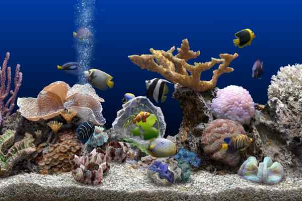 arrecife de coral tropical con peces