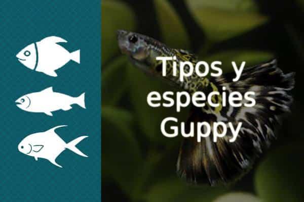 Tipos y especies de pez Guppy