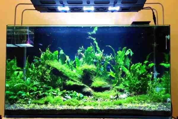 Iluminación acuario