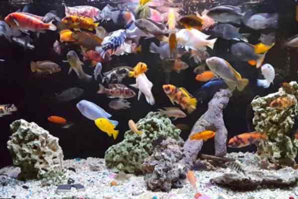 Sobrepoblación acuario