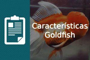 Características Goldfish