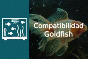 Compatibilidad Goldfish