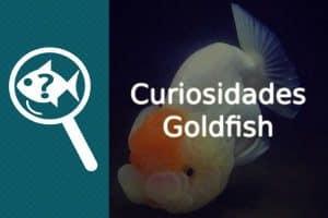 Curiosidades Goldfish