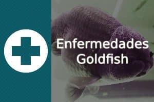 Enfermedades Goldfish