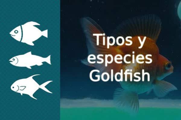 Tipos Goldfish