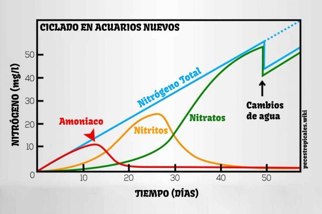 Ciclo del nitrógeno en acuarios