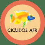 icono ciclidos africanos tabla de compatibilidad