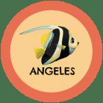 Icono peces Angel tabla de compatibilidad