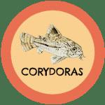 icono peces corydoras tabla de compatibilidad