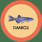 icono peces danios tabla de compatibilidad