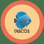 icono peces disco tabla de compatibilidad