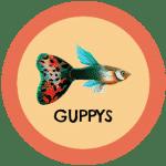 icono peces guppy tabla de compatibilidad