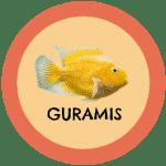icono peces guramis tabla de compatibilidad