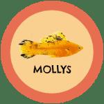 icono peces mollys tabla de compatibilidad